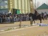 botezul-cailor-bailesti-2015-19