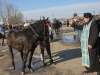 botezul-cailor-bailesti-2015-36