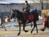 botezul-cailor-bailesti-2015-39