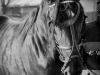 botezul-cailor-bailesti-2015-43