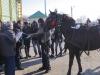 botezul-cailor-bailesti-2015-53