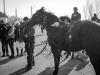 botezul-cailor-bailesti-2015-54