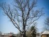 bailesti-iarna-2012-091