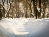 bailesti-iarna-2012-095