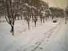 bailesti-iarna-bulevard2
